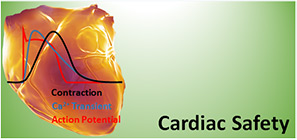 Cardiac Safety